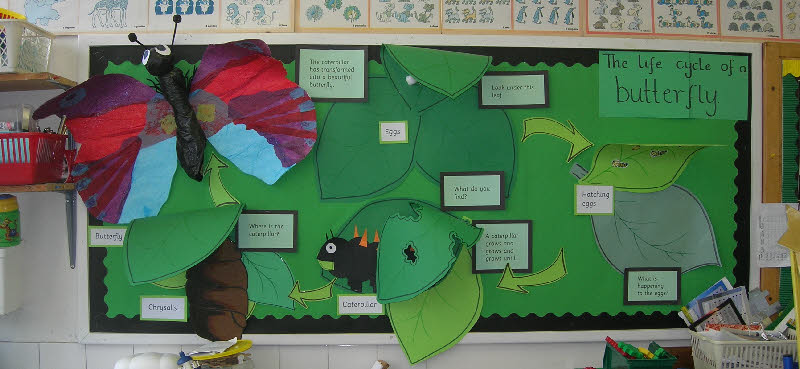 life cycle of a butterfly classroom display photo   photo