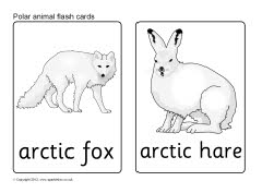 Easy Things To Draw Top Five Mistakes By New Artists 01 besides Topic1954228 in addition NSAIDs  ibuprofen  advil  aleve also Sb7726 Polar Animal Flash Cards also What S The Font. on topic