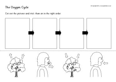 the oxygen cycle cut and stick worksheets sb8191