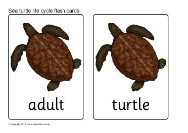 flash cards blue