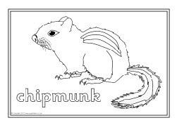 North american animals coloring pages more information North American Animal Tracks North American Wilderness Animals Coloring Pages Plains Indians Coloring Pages