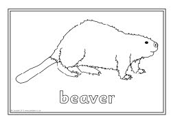 north america animals coloring pages - photo#6
