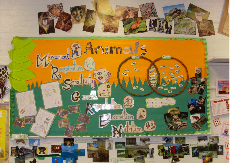 Ideas In Classroom ~ Animals classroom display photo gallery sparklebox