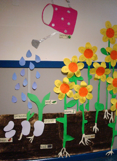 Planting And Growing Seeds Classroom Display Photo