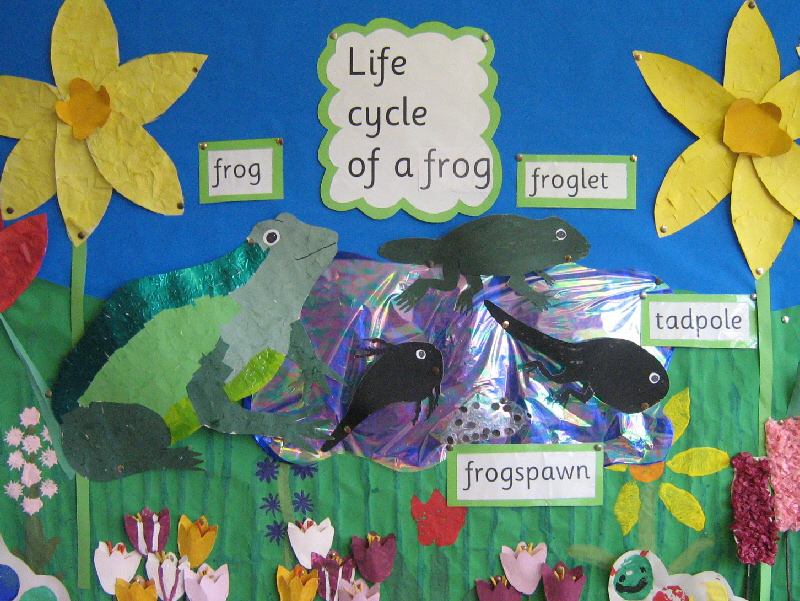 Frog life cycle classroom display photo - Photo gallery - SparkleBox