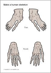 Make The Cut >> Make a human skeleton cut-outs (SB5145) - SparkleBox