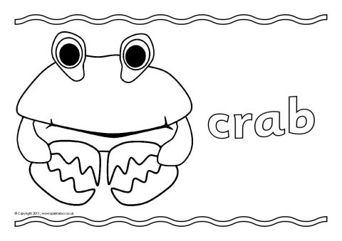 rockpool creatures coloring pages | Under the Sea Colouring Sheets (SB3985) - SparkleBox