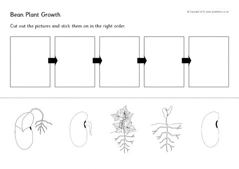 Plant Growth Observation Worksheet by Shannon Allison ...
