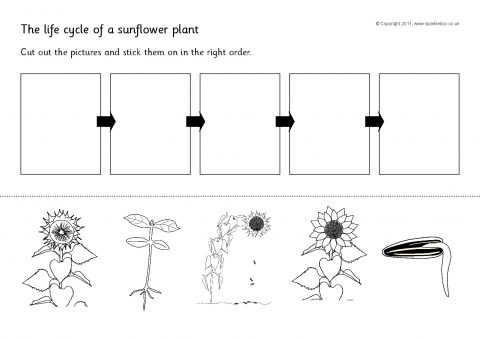 Plants Activities and Games Teaching Resources and Printables ...