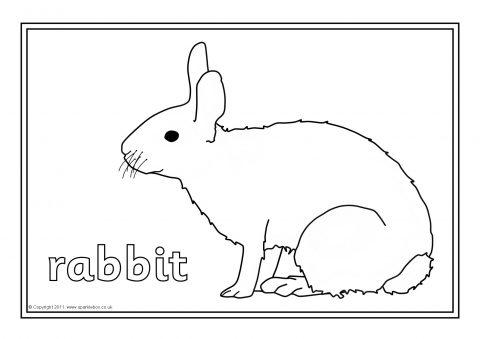British Wildlife Colouring Sheets (SB5388) - SparkleBox
