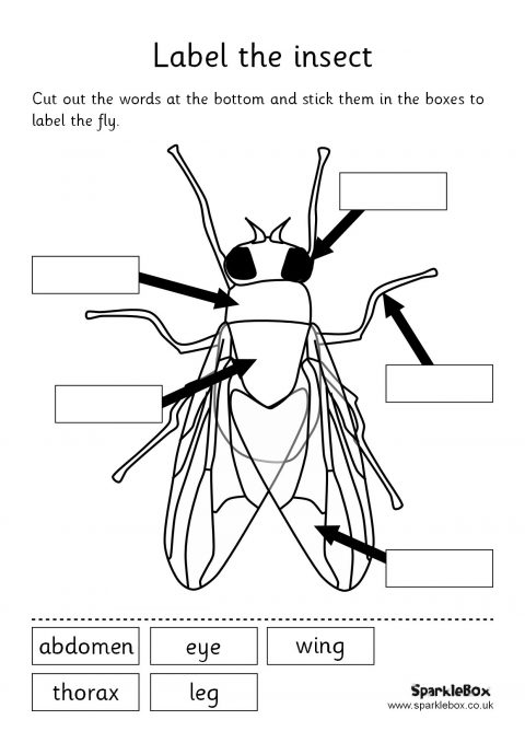 label the insect set  sb158