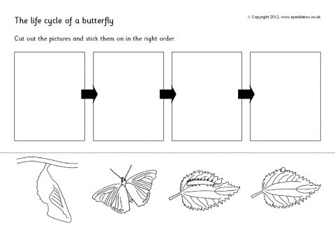 Butterfly Life Cycle and Growth Teaching Resources - SparkleBox
