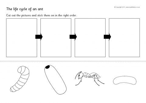Ant Life Cycle Cut And Stick Sb4648 Sparklebox