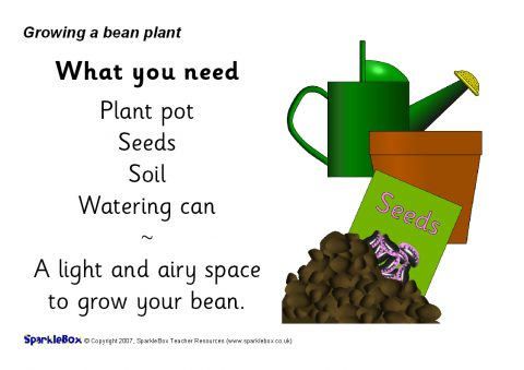 Plants Activities And Games Teaching Resources And Printables