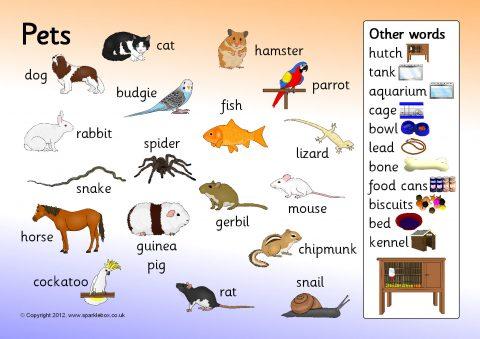 Pets Word Mat Sb2089 Sparklebox