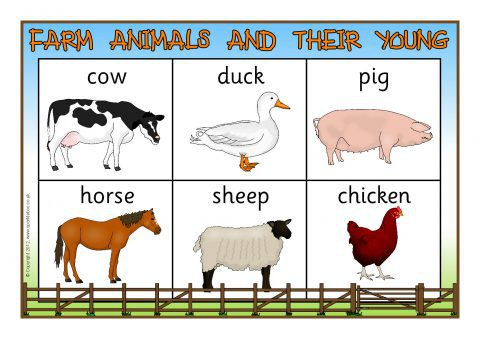 Resource image regarding printable farm animal pictures