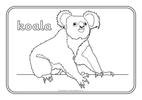 It is a photo of Influential Australian Animals Coloring Pages