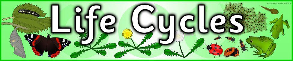 Life Cycles Display Banner (SB4006) - SparkleBox