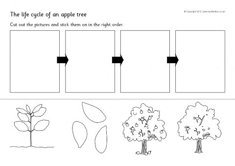 Apple Tree Life Cycle Cut And Stick Sb8917 Sparklebox