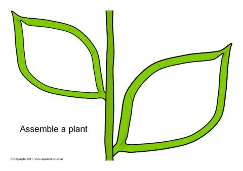 Assemble A Plant Editable Templates (SB4875)  Editable Leaf Template