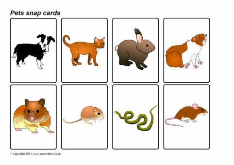 Pets Snap Cards (SB4583) - SparkleBox