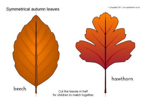 Matching Images >> Symmetrical Autumn Leaf Matching Activity (SB6434) - SparkleBox