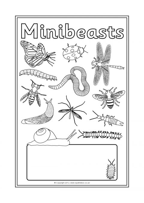 Minibeasts Editable Topic Book Covers Sb7963 Sparklebox