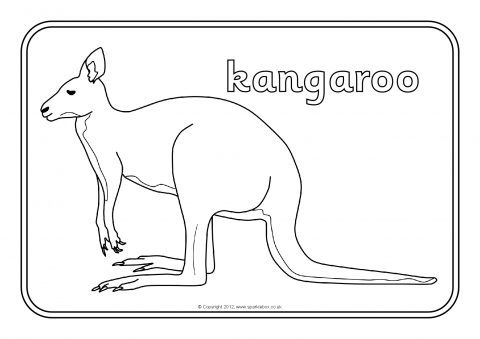 Colouring Pages Featuring Various Australian Animals Preview