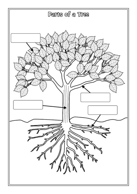 parts of a tree labelling worksheets  sb12381