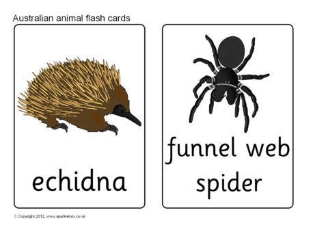 Australian Animal Flash Cards Sb7728 Sparklebox