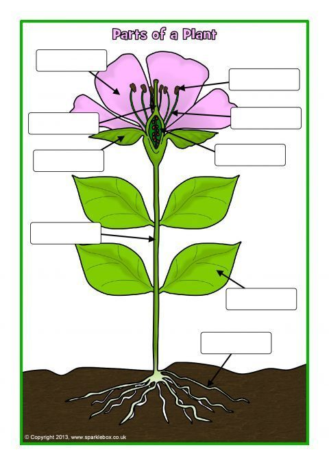 Parts of a Plant and Flower Posters/Worksheets (SB1317 ...