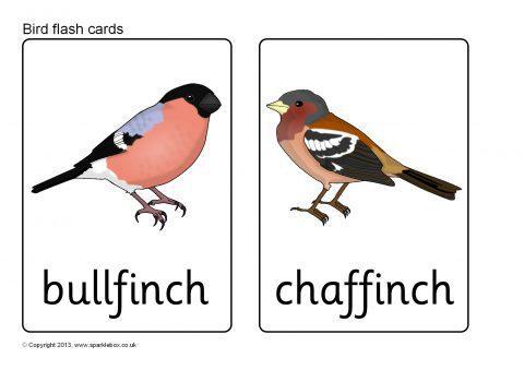British Birds Flash Cards