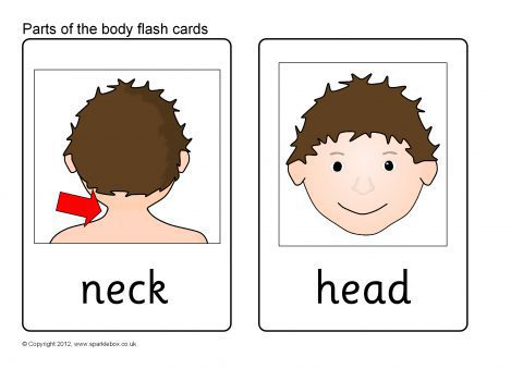 Parts of the Body Flash Cards (SB8255) - SparkleBox