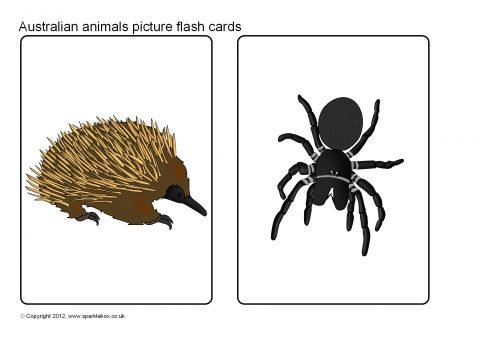 Australian Animal Picture Flash Cards (SB7802) - SparkleBox