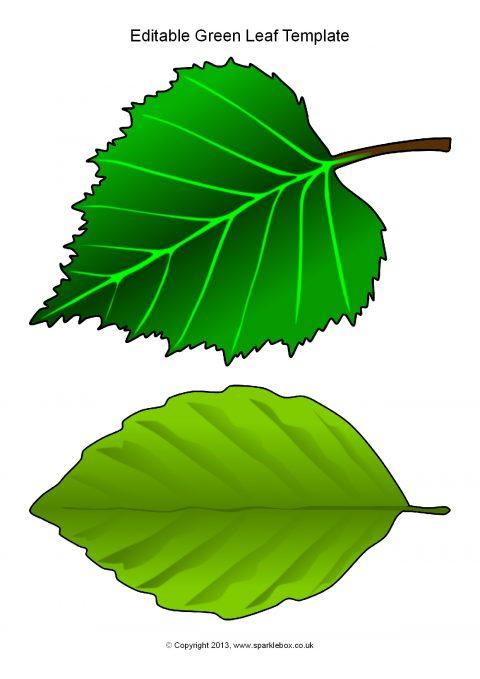 editable green leaf templates  sb10010