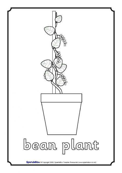 coloring pages of bladderworts plants - photo#12