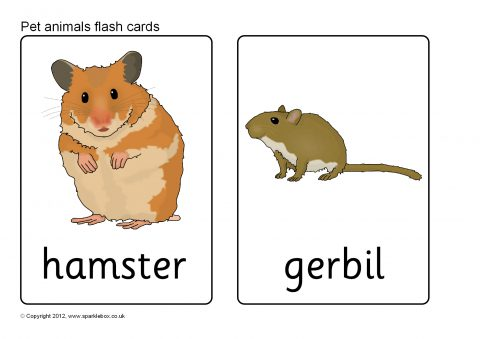 Maviu A Fl Jlnlonb Xa M furthermore Picture likewise Forestanimals further  in addition Maxresdefault. on animal flashcards