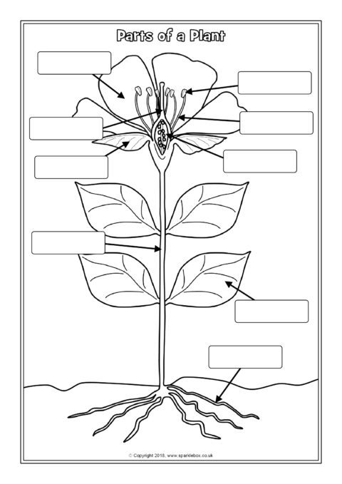 Parts Of A Plant Labelling Worksheets Sb12380 Sparklebox