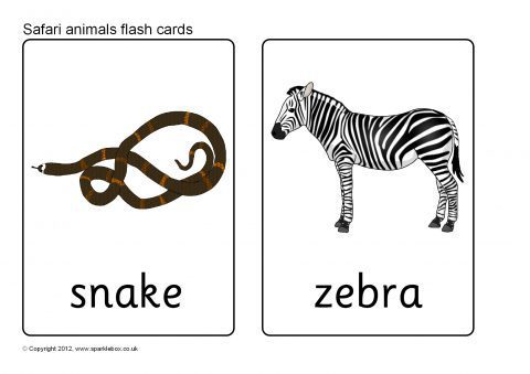 Pp A B A F likewise Wp B E C furthermore  together with F D Dfbffafb Df Ccec F E Safari Animals Wild Animals additionally Wp F. on sb7723 safari animal flash cards