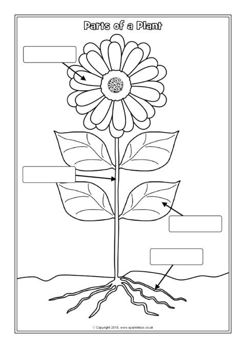 parts of a plant coloring pages | Parts of a Plant Labelling Worksheets (SB12380) - SparkleBox