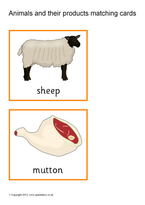 Animals and Product Matching Cards