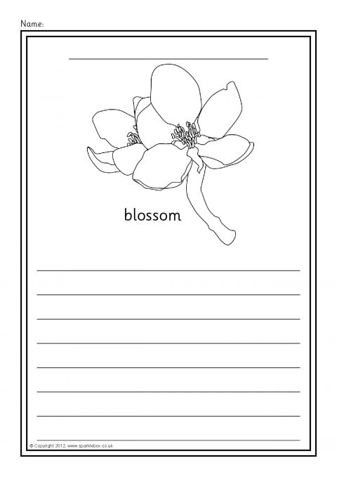 Apple Tree Life Cycle Colour And Write Worksheets