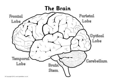label the brain worksheets sb11585 sparklebox. Black Bedroom Furniture Sets. Home Design Ideas